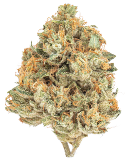 Kuchi Dawg Cannabis Flower