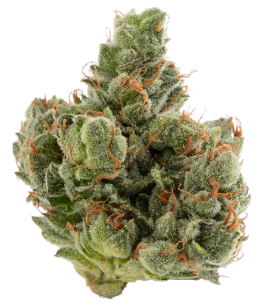 Motor Breath Cannabis Flower